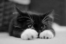 cuteness / by Mary Deighton