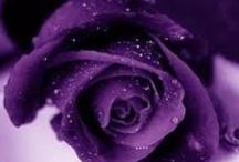 Purple Passions / by Janet VanBuskirk