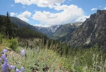 My Montana / by Great Falls Tribune
