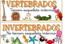 LOS SERES VIVOS / Recopilación de recursos para el área de Conocimiento del Medio/CCNN. Bloque: los seres vivos. Educación Primaria / by Ana Fernández