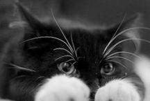 ^^ Cute animals ^^ / by Donalda Alexander