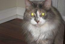 How do you like meow? / by Brenda Cruise
