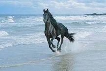 ♞ Horses ♞ / by T.C.Kim Dersin