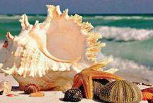 The Treasures of the Sea / by T.C.Kim Dersin