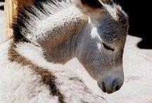 Donkeys, Mules, Zebras & Asses / by Jackie Winn