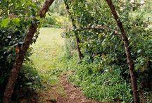 """The Secret Garden / """"Might I,"""" quavered Mary, """"might I have a bit of earth?""""--Frances Hodgson Burnett, The Secret Garden / by Michelle Grindel Medsker"""