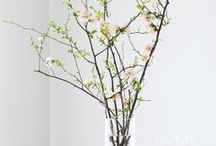Spring Decore & More / Seasonal decoration, feelings, food, drink, and more / by Lori Tolliver