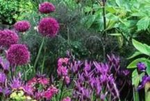 Gardening, Gardens and outdoor spaces! / Beautiful gardens to see and to create!  Just mix plants, soil, sun, water, work and imagination and you can have a beautiful garden!  / by Janel Warner