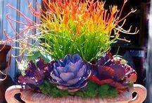 Succulents  / by Janel Warner