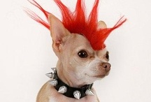 ♥ Gothic Pets ♥ / by Goth Auctions