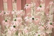 Growing up in Little Pink Houses.... / by gigis cottage