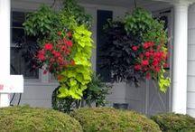 plants/flowers / by rhonda jones