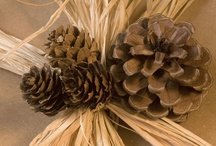 Pine Cone Inspirations / by YesterYear Primitives