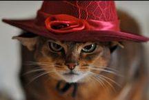 Все хотят быть кошками / Вы всё ещё не хотите? Тогда мы идём к вам. / by Кэрол Джонс
