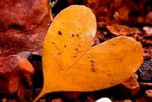 Autumn Colors / by Barbara Washburn