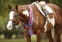Paint / Pinto / Pintaloosa Horses / by Holly Pol