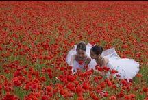 Poppy Heaven / by Blythe