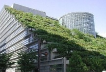 Green Roofs / by Int'l Roofing Expo