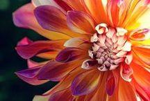Flowers.. So pretty! / by Ashley Arneson