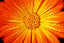 Orange makes me smile / by Sherry Richardson