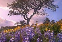 Full bloom / by Jessie Studie