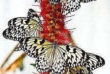 Wings and things / by Jessie Studie