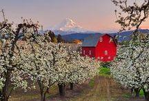Barn country / by Jessie Studie