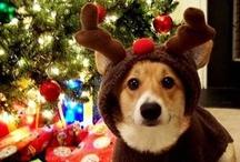 Christmas Cheer / by Cat Doolan