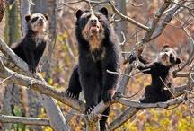 Bears / by Jon M Cole
