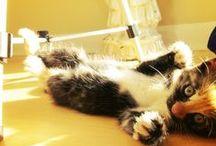 Kitties n cuties / by A. Elizabeth Boone-Merriwether