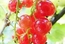 llavors, fruits i fruites. / by L.R.