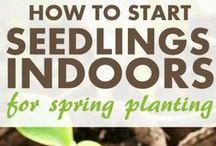 Garden Tips / Tips for indoor and outdoor gardening / by Paleo Cupboard