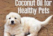 Paleo Pets / Paleo pet food recipes and use  / by Paleo Cupboard