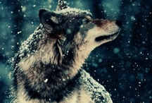 Wolves = Untamed Nature / by Tamsin Allen / Creative