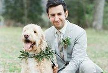 groom / by Michelle Boyd