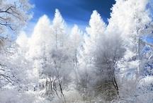 Winter Wonderland / by ~❤~ Angelina  ~❤~