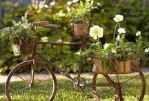 Beautiful Bicycles .. ♥ / by Aurora ♥ Zúñiga
