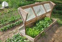 Hoop house, green house & cold frames & poly tunnels / by Sherrie Lou