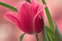 My Favorite Flower / by Michelle Larson Rose
