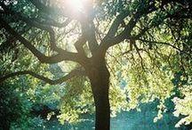 trees / by Trish Gallant