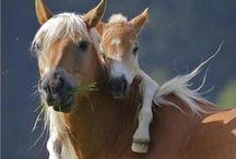 Horses / by K