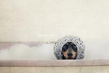 All things dachshund / by Phred Martin