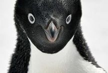 Animaux / by Pascale
