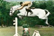 equestrian lol / by Charlotte Jeanne
