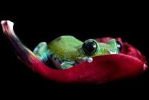 feelin froggy / by Lisa Carolus