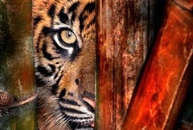 Lions and tigers and..... / by Lisa Carolus