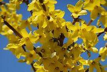 Plants: Shrubs & Bushes (Except Roses) / by Michele Mettey Jones