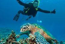 Scuba Diving CENOTES / by Chris Swiniarski
