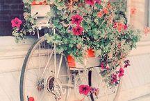 Bicycles in Bloom / by Gabriela Ferreira