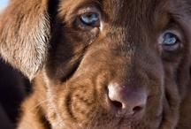 Puppy Love / Man's Best Friend! / by Shea Fields